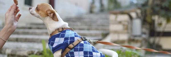 Hvad skal du gøre med dit gamle tøj 3 tips til at rydde op i dit klædeskab Forvandl det til tøj til dit kæledyr - Hvad skal du gøre med dit gamle tøj? 3 tips til at rydde op i dit klædeskab